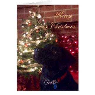 黒い実験室のクリスマスカード カード