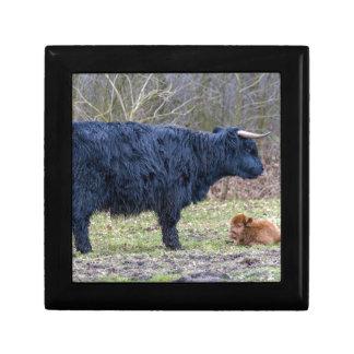 黒い母子牛を持つスコットランドの高地居住者牛 ギフトボックス