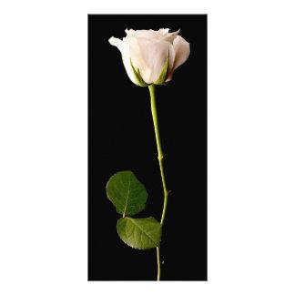 黒い背景の独身のな白いバラ ラックカード
