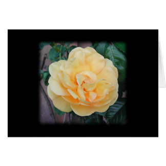 黒い背景の黄色バラ、 カード