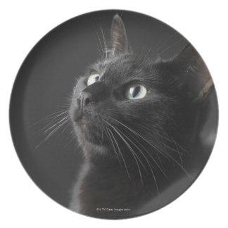 黒い背景、クローズアップに対する黒猫 プレート