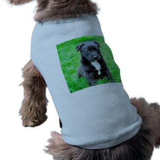 黒い赤ん坊犬 ペット服