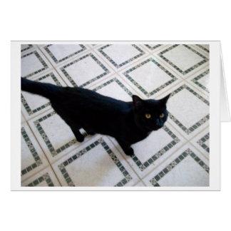 黒い金目猫 カード