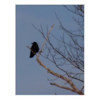 黒い鳥 ポストカード