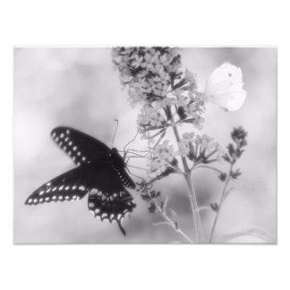 黒い1つ及び白い1の蝶写真 フォトプリント