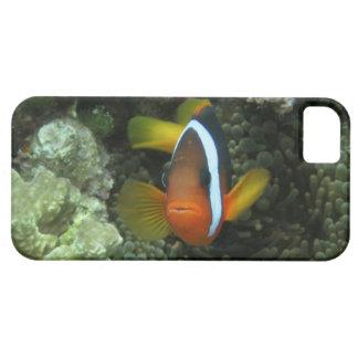 黒いAnemonefish (Amphiprionのmelanopus) iPhone SE/5/5s ケース