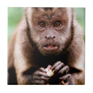 黒おおわれたcapuchin猿のクローズアップ タイル