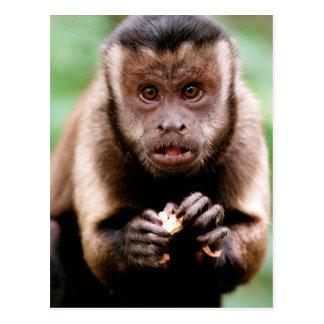 黒おおわれたcapuchin猿のクローズアップ ポストカード