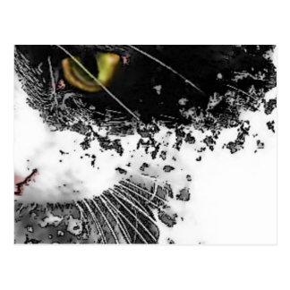 黒く及び白い猫 ポストカード