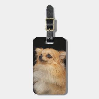 黒で調べるポメラニア犬 ラゲッジタグ