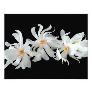 黒のマグノリアの花のトリオ フォトプリント