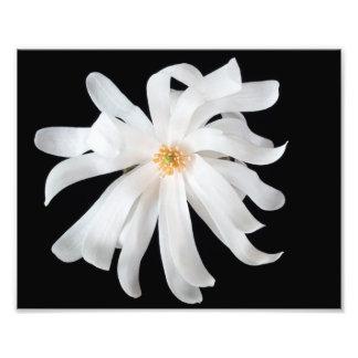 黒のマグノリアの花 フォトプリント