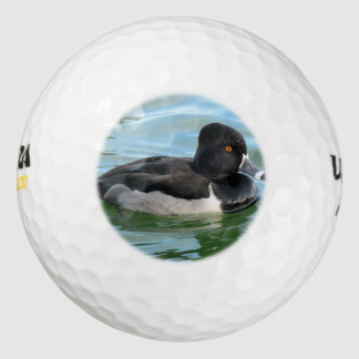 黒はリングネックの海の潜水ガモRingbillの先頭に立ちました ゴルフボール