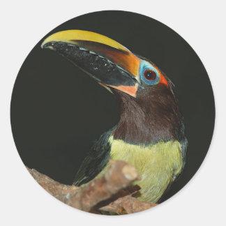黒ネックのaracari Toucan ラウンドシール