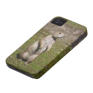 黒後につかれたプレーリードッグ Case-Mate iPhone 4 ケース