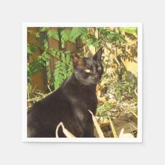 黒猫の朝日曜日 スタンダードカクテルナプキン