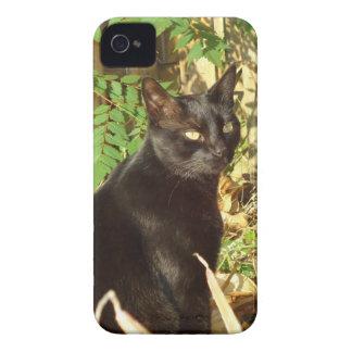 黒猫の朝日曜日 Case-Mate iPhone 4 ケース