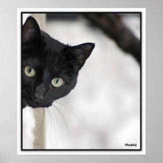 黒猫-ボーダーを持つ… ポスター
