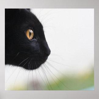 黒猫 ポスター