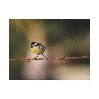黒、塀の黄色の白い鳥PARDALOTE キャンバスプリント