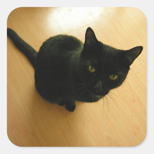 黒 猫 着席 堅材 床 正方形シール・ステッカー