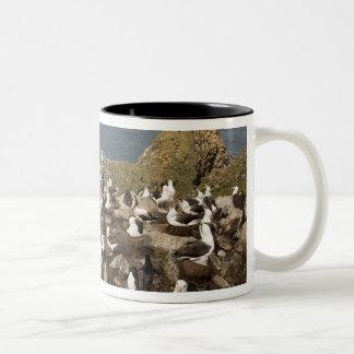 黒browedアホウドリ、Thalassarche ツートーンマグカップ