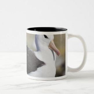 黒browedアホウドリThalassarche ツートーンマグカップ