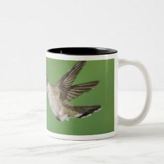 黒chinnedハチドリ、Archilochus 2 ツートーンマグカップ