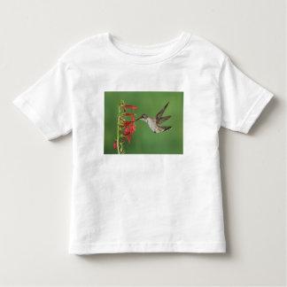 黒chinnedハチドリ、Archilochus 2 トドラーTシャツ