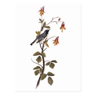 黒Throated青いアメリカムシクイのAudubonのヴィンテージの芸術 ポストカード