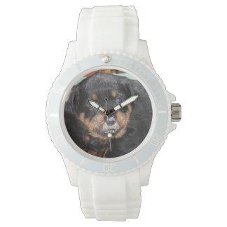 鼻の食糧を持つロットワイラーの子犬 腕時計