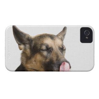 鼻を舐めているジャーマン・シェパードのクローズアップ Case-Mate iPhone 4 ケース