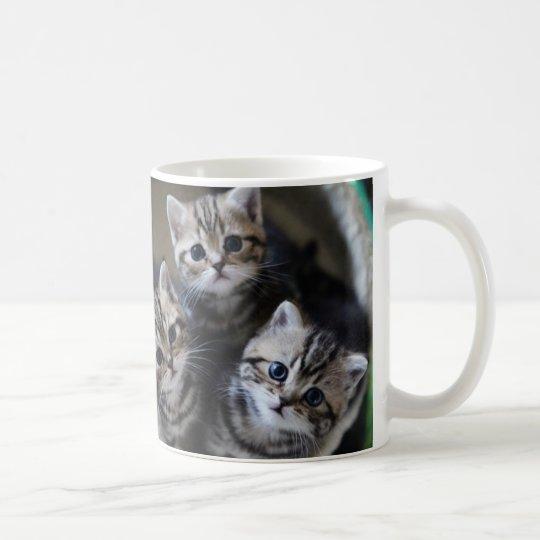 3匹のアメリカンショートヘアの子猫たち マグカップ コーヒーマグカップ