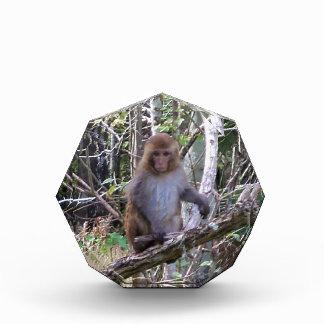 001aリーサスマカク属猿 表彰盾