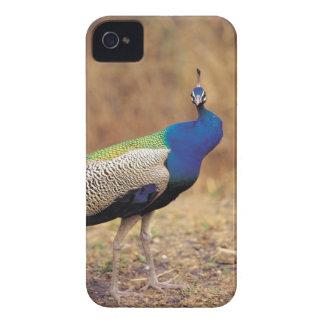 0 3 Case-Mate iPhone 4 ケース