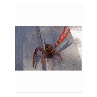 1つのcrawfish ポストカード