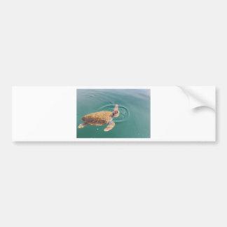 1匹の大きい水泳のウミガメのCaretta バンパーステッカー