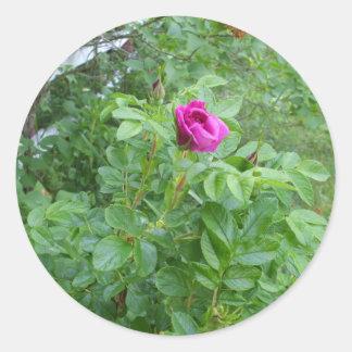 1匹の赤いバラ-友情日 ラウンドシール