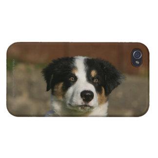 12 1週間目のボーダーコリーの子犬のHeadshot iPhone 4 Cover