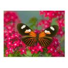14の蝶のSammamishワシントン州の写真 ポストカード