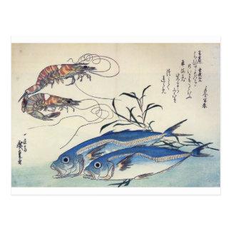 1800's頃日本のな海洋生物の絵画 ポストカード