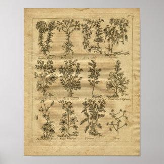 1817年のヨモギのユッカのCulpeperの草のプリント ポスター