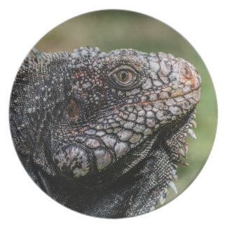 1920px-Iguanidae_head_from_Venezuela プレート