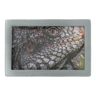 1920px-Iguanidae_head_from_Venezuela 長方形ベルトバックル