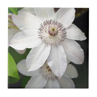 2つの白いクレマチスの花 タイル