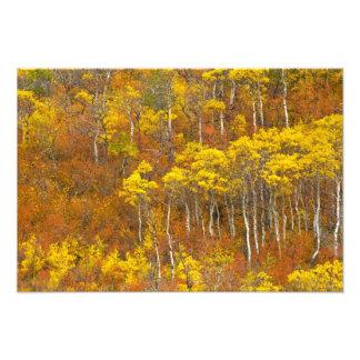 2のピーク秋色の震動《植物》アスペン果樹園 フォトプリント
