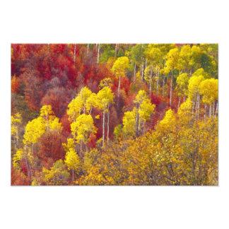 2のローガン渓谷ユタのカラフルな《植物》アスペン フォトプリント