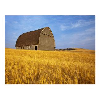 2の成長した小麦畑の素朴で古い納屋 ポストカード