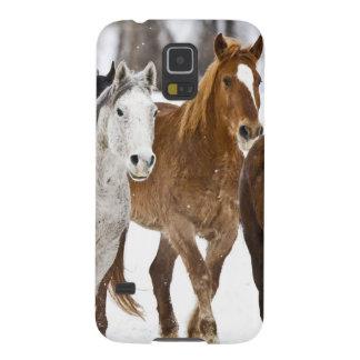 2の連続した馬の景色冬 GALAXY S5 ケース