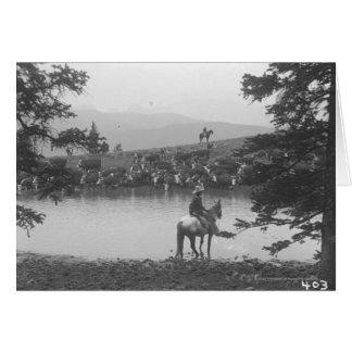 2人のカウボーイが付いている池による牛 カード